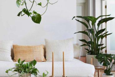 Indoor Plants for Low Light
